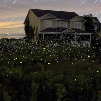 Previous article: Fireflies are doing their annual takeover of New York and it looks damn beautiful