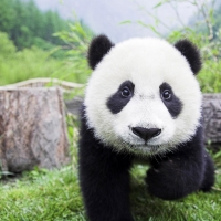 Previous article: Panda Cam