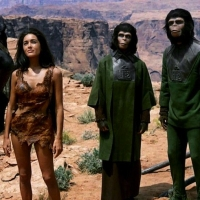 Previous article: Nature Corner: The New Age Of Apes