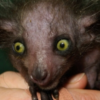 Previous article: Nature Corner: The Aye-Aye