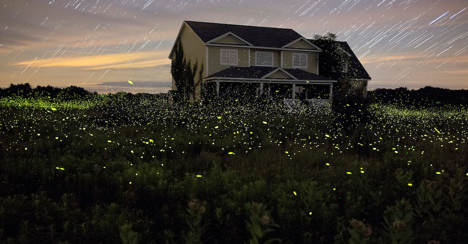 Fireflies are doing their annual takeover of New York and it looks damn beautiful