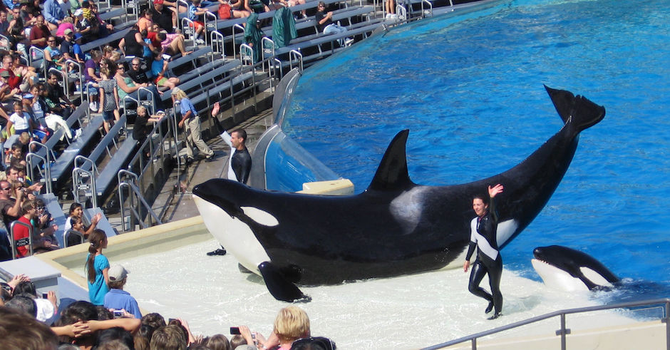 SeaWorld is starting to phase out Orca shows